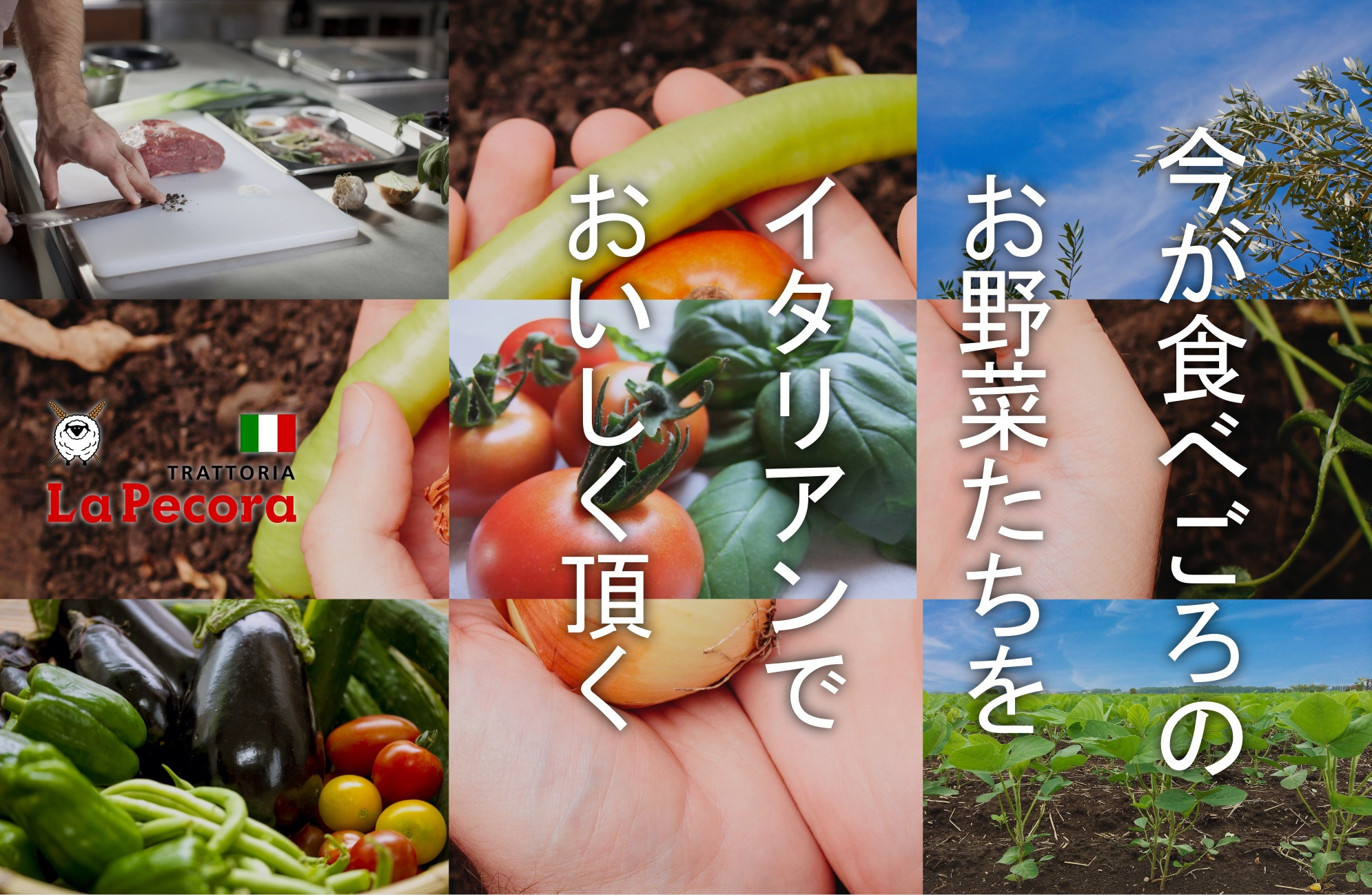 夏野菜のイタリアン